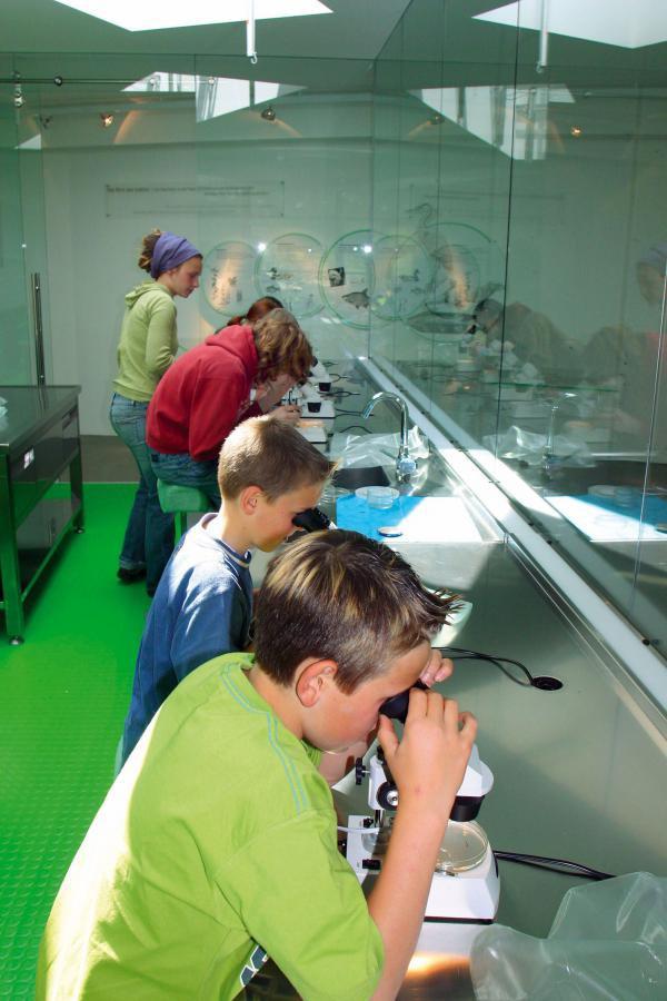 Kinder mit Mikroskopen
